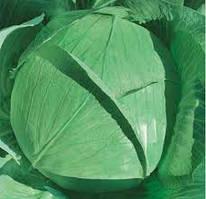 Семена капуста Белокочанная Ярославна 10 г Коуел Италия округло-плоская