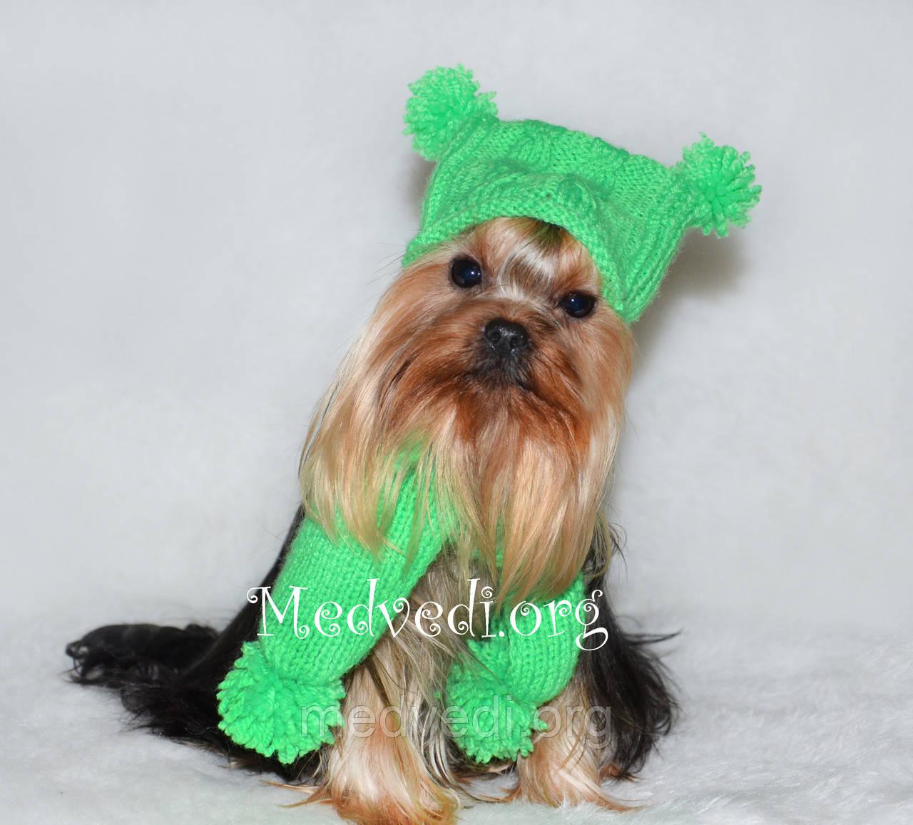 Купить Вязаная зеленая шапка и шарф для собаки