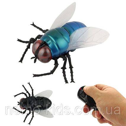 Муха на радиоуправлении, насекомое игрушка на радиоуправлении