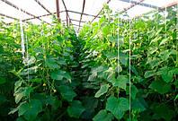 Який парник для огірків забезпечить хорошу врожайність