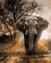 Живопись по номерам Слон в лучах заката VP1400 Babylon Turbo 40 х 50 см