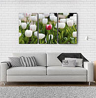 Модульна картина Poster-land Квіти Тюльпани Аrt-134_3А