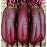 Семена свеклы столовой Карилон (карильйон), 100 000 семян (цилиндрическая PR) (калибр 2.75-3.50), Rijk Zwaan