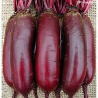 Свекла столовая Карилон (карильйон Р.З.), 100000 семян (цилиндрическая PR) (калибр 2.75-3.50)