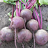 Семена свеклы столовой Ларка (Larka), 500 000 семян  (округлая PR) (калибр 2.75-3.50), Rijk Zwaan