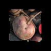 Свекла столовая Либеро (Libero RZ), 500000 семян ( округлая)