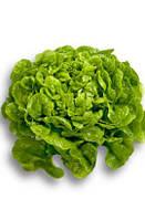 Салат дуболистный Китония (Kitonia RZ), зеленый, 5000семян, дражже