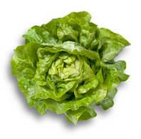 Салат головчатый Джиска  (Jiska RZ), зелений, 1000семян (тип Маслянистый), дрожже