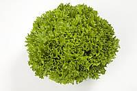 Салат Саланова/свит криспи Экзакта (Exact RZ) зеленый, 5000семян, дражже