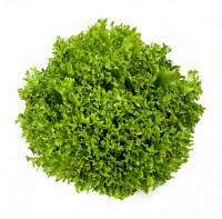 Насіння салату Саланова/світ криспи Экспедишн (Expidition) зелений, 1000сем., дражже, Rijk Zwaan