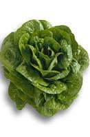 Ромен салат Клаудиус (Claudius RZ), 5000 семян, дражже