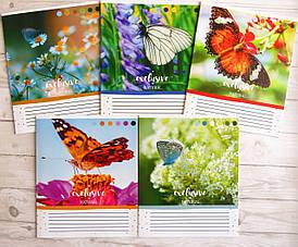 Тетрадь школьная в клеточку Лидер, 12 листов, бабочки