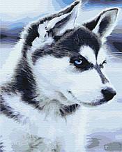 Картина по номерам Щенок Хаски 40*50см Brushme Пес Собаки