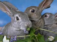 Комбикорм полнорационный для кроликов