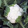 ОПАЛ - капуста цветная, 1 000 семян Rijk Zwaan