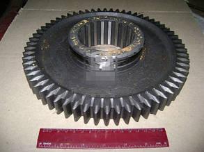 Шестерня 1-передачи вала вторичного ЯМЗ 236 Z=62 (Россия). 236-1701112