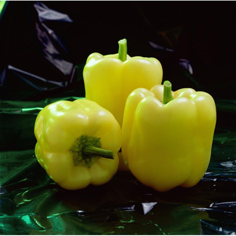 Очень ранний гибрид желтого сладкого перца Мадонна F1 Clause профсемена 500 шт, Для пленочных укрытий и теплиц