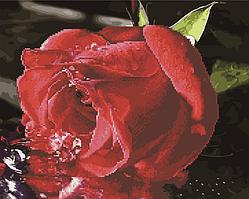 Алмазна мозаїка і картина за номерами Brushme Червона троянда BGZS1074 40х50см в коробці алмазна картина і набір