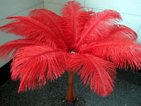 Большие  перья страуса красные 50-55 см.
