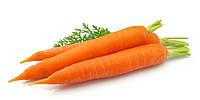 Семена моркови профессиональны...