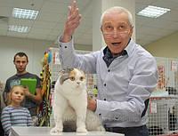 Выставочная экспертиза кошек международ. экспертами
