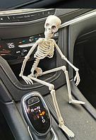 Подвижная модель скелет человек игрушка сувенир в авто на шарнирах 40 см