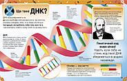 Надзвичайні ДНК. Шалені гени, незламні кодони, верткі хромосоми, фото 4