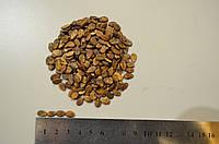 Семена Арбуза АУ Продюсер, кавун  1 кг