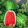 Семена арбуза Думара F1 1000 семян Nunhems