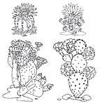 Cactus party. Розмальовка-оазис для творчості і натхнення, фото 2