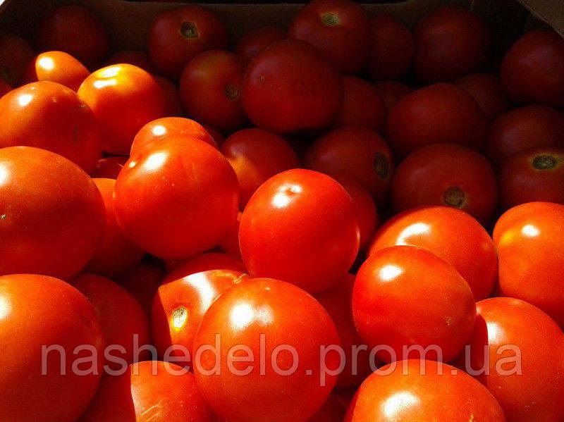 Отранто Ф1 1000 сем. томат Нунемс