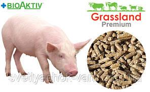 Комбікорм для поросят Гровер що містить премікс Prostafeed повнораціонний 100% від 35 до 65 кг, от 1 кг