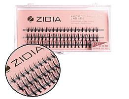 Вії накладні пучкові Zidia Cluster Lashes 16D KIM C 0.10 MIX (3 лєнти, розмір 8/10/12 мм)