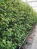 Агрошпалера (пластикова дріт) 3мм. 15 метрів, фото 3