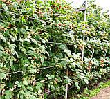 Агрошпалера (пластиковая проволока) 3мм.  15 метров, фото 5