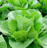 Ромен салат Викторинус (Victorinus RZ),5000 семян, дрожже