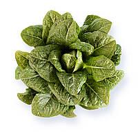 Насіння салату ромен Авона (Auvona), 1000 сем. (міні ромен), дражже, Rijk Zwaan