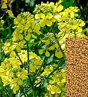 Семена Горчицы 1кг (мешок 25кг)