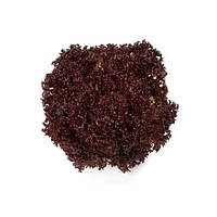 Салат полуголовчатый Кармези (Carmesi RZ), 5000 семян, дражже