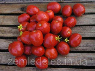 Семена томата Лампо F1 10000 семян Nunhems