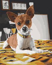 Картина по номерам  Чихуахуа 40х50 см 11633-AC Art Craft