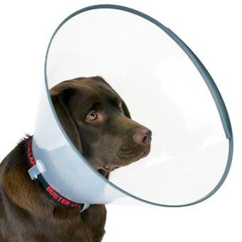 Ветеринарні коміри для собак
