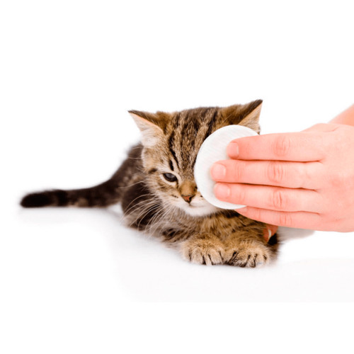 Средства для глаз для кошек