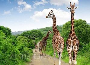 """Экскурсионный тур в ЮАР """"Африканское сафари в ЮАР"""" на 9 дней / 8 ночей"""