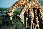 """Экскурсионный тур в ЮАР """"Великая звезда Африки"""" на 10 дней / 9 ночей, фото 4"""