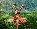 """Экскурсионный тур в ЮАР """"Великое африканское путешествие"""" на 10 дней / 9 ночей, фото 4"""