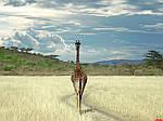 """Экскурсионный тур в ЮАР """"Чарующий мир бриллиантов Африки"""" на 11 дней / 10 ночей, фото 4"""
