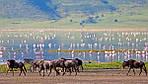 """Экскурсионный тур в Танзанию """"Кратер Нгоронгоро - озеро Маньяра"""" на 4 дня / 3 ночи, фото 2"""