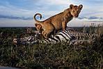 """Экскурсионный тур в Танзанию """"Кратер Нгоронгоро - Серенгети - озеро Маньяра"""" на 4 дня / 3 ночи , фото 5"""