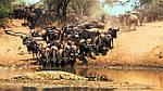 """Экскурсионный тур в Танзанию """"Кратер Нгоронгоро - Серенгети - озеро Маньяра"""" на 4 дня / 3 ночи , фото 4"""